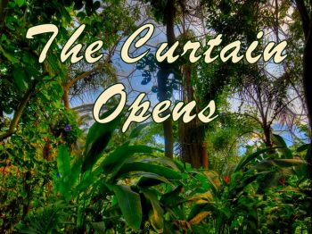 Curtain opens